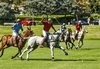 Polo Match Benefiting Safety Harbor Kids Review - A Fun Rewarding Day on the Fields
