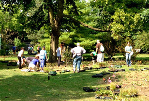 Creating Better Habitat for Birds (and People) at Gillson Park Review – A Remarkable Day